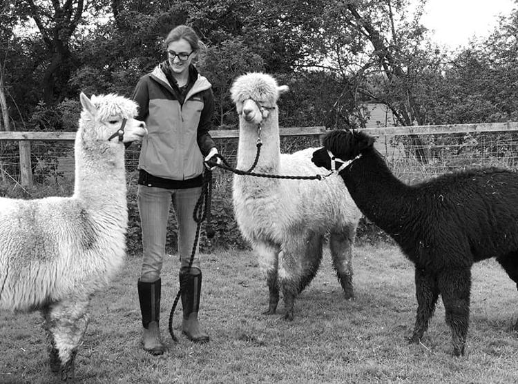 Catherine Price with her Alpacas for Maker of the month interview with Nurture Collective