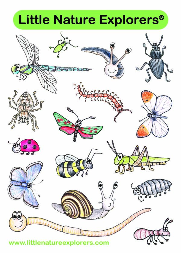 Bug Stickers by Emma Lawrence at Nurture Collective