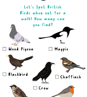 A Bird Spotting Activity Sheet a free printable download by Nurture Collective