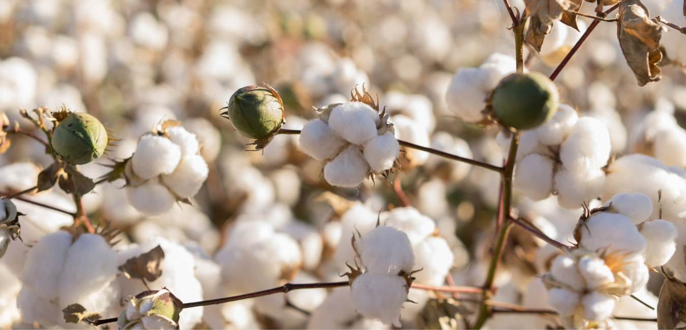 Why choose organic cotton blog at Nurture Collective