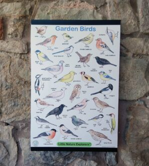 Garden Birds illustrated poster by Emma Lawrence at Nurture Collective