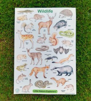 Wildlife illustrated poster by Emma Lawrence at Nurture Collective